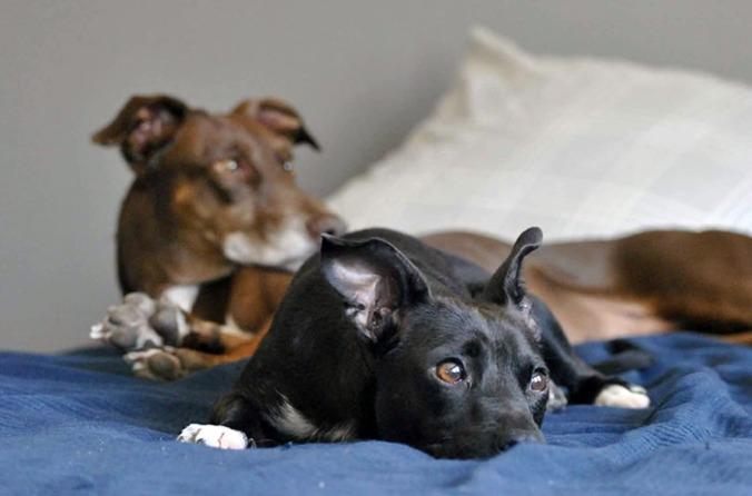 Brun och svart hund