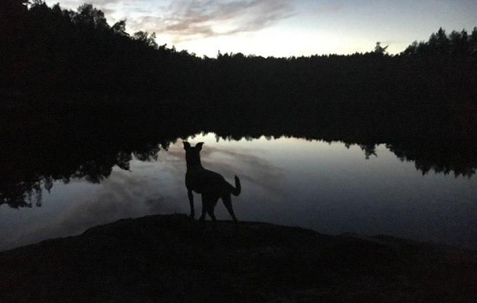Hund tittar ut över vatten