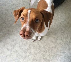 Nico, adopterad 2018.