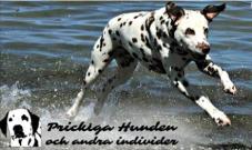Prickiga hundens logga