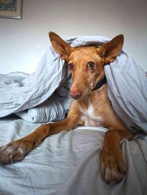 Mika (Frida), adopterad 2018.