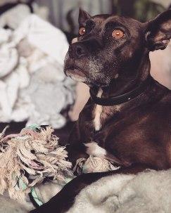 Lasia, adopterad 2018.