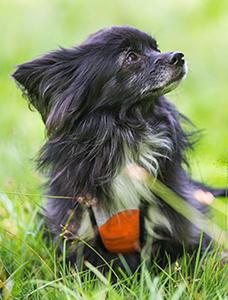 Hunden Lilly