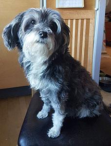 Hunden Ayla