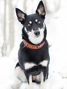 Hunden Virva