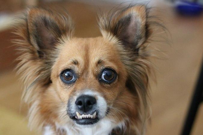 Bild på liten hund
