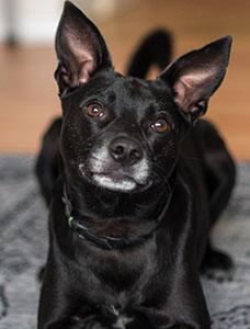 Hunden Burt