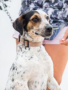 Hunden Sara
