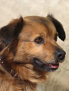 Hunden Miko