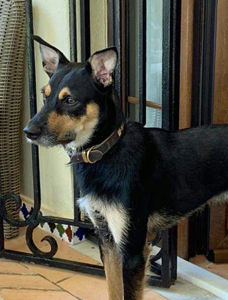 Hunden Dante