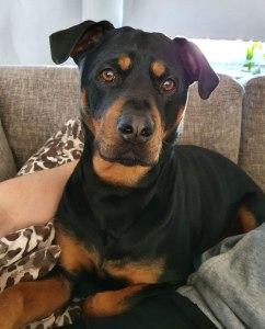 Hunden Ronja